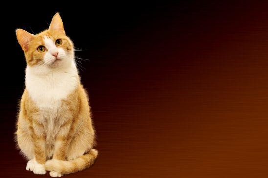cat-1840854