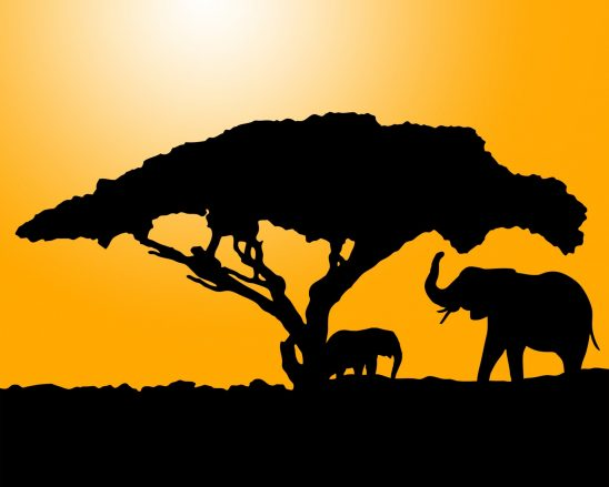 elephant-220265