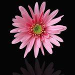 flower-3207768