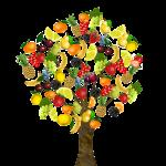 fruit-1929879