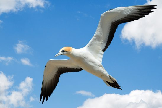 gull-2781526
