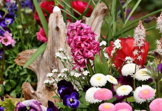 hyacinth-3318685