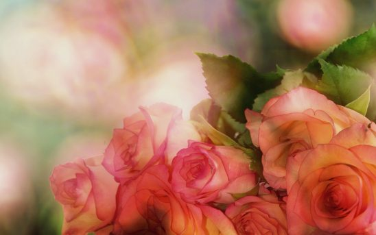 roses-3141486