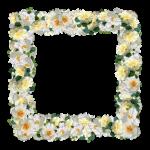 roses-3285566