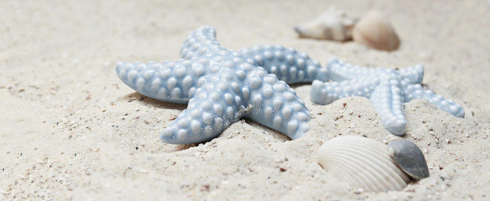 starfish-2423999