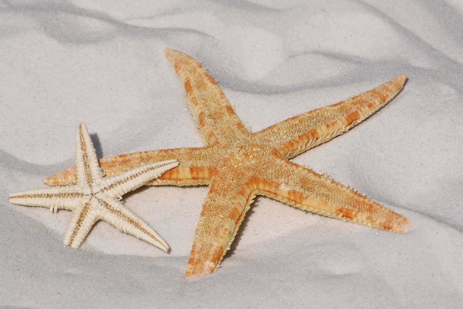 starfish-343791