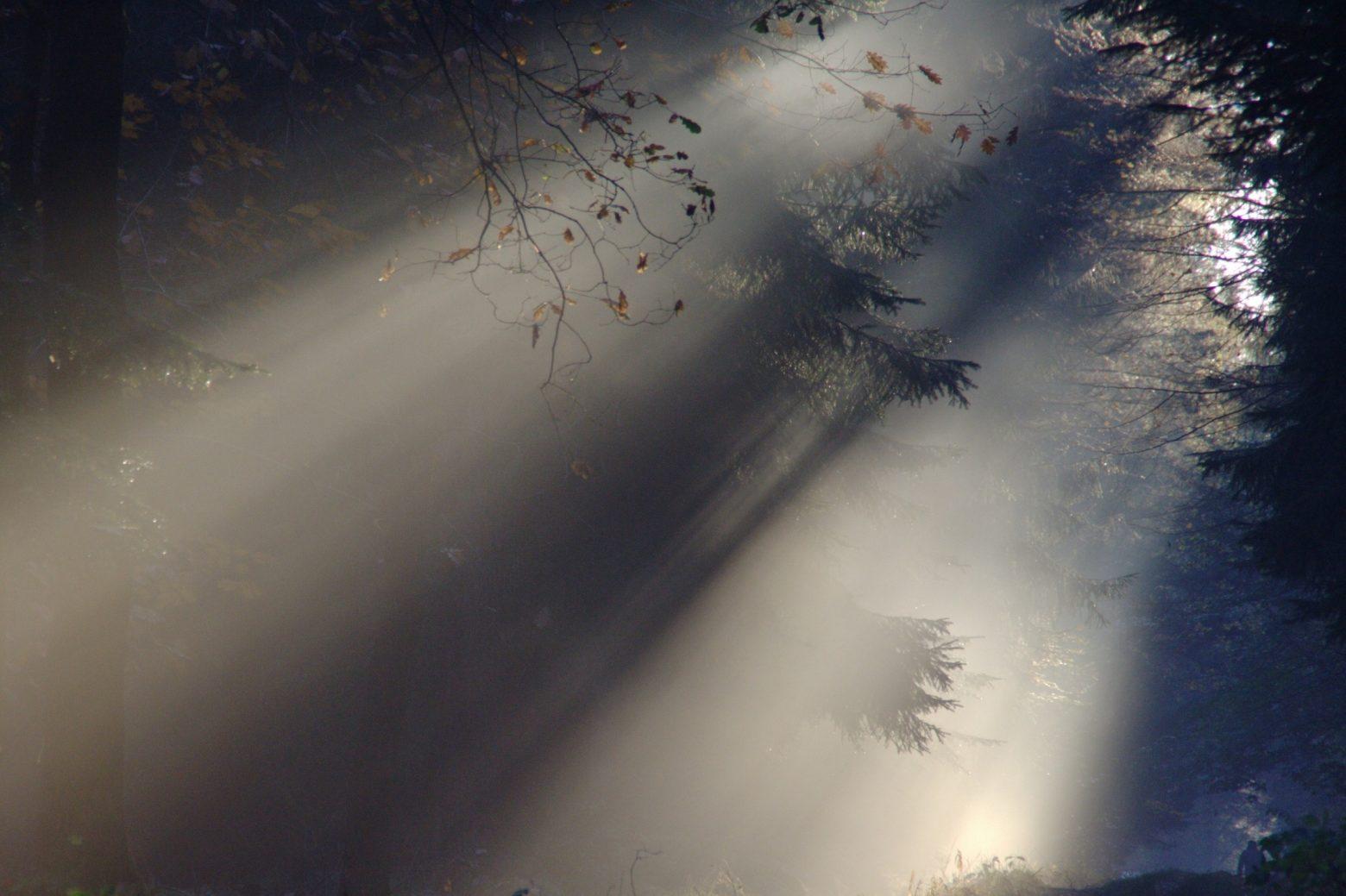 sunbeam-76825