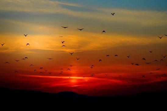 sunset-100367