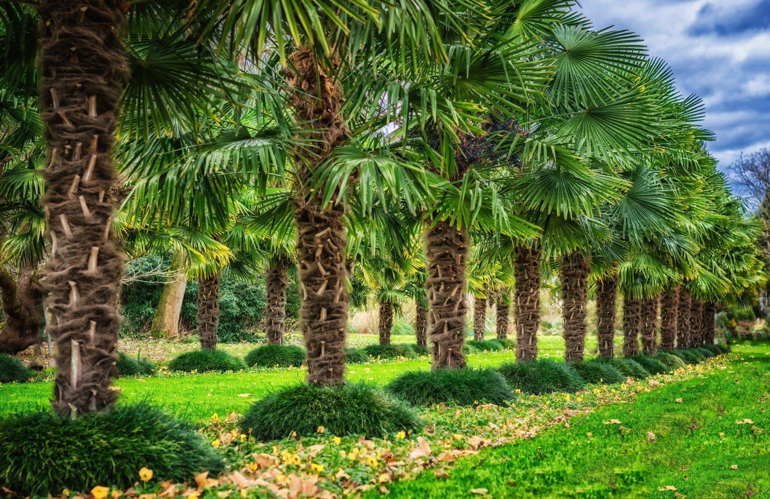 trees-3053021