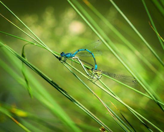 dragonfly-1443783