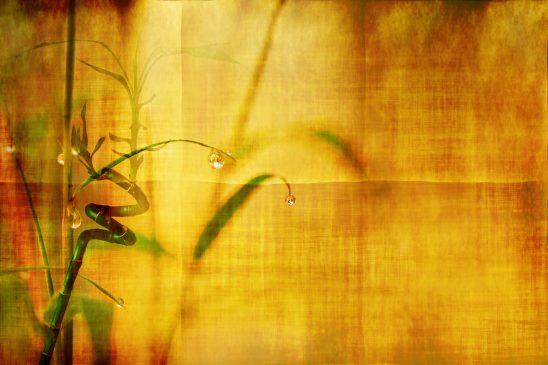 bamboo-2118469