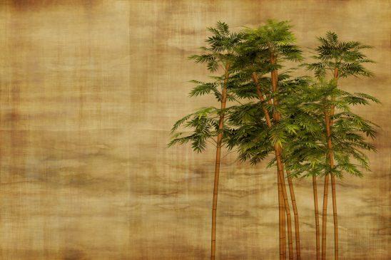 bamboo-2118470