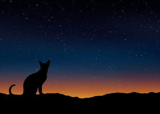 cat-1745318