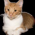 cat-2634641