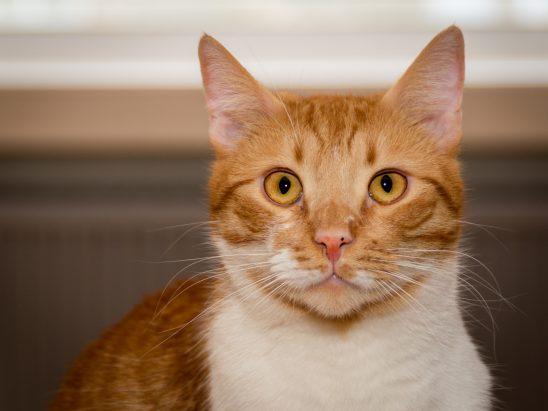 cat-3315710