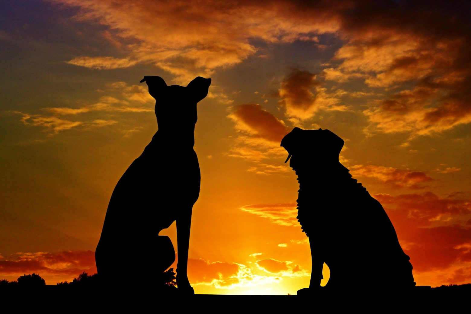 dogs-2222801