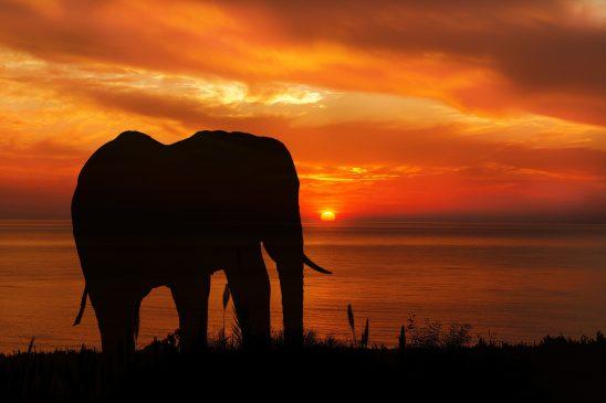 elephant-2781596