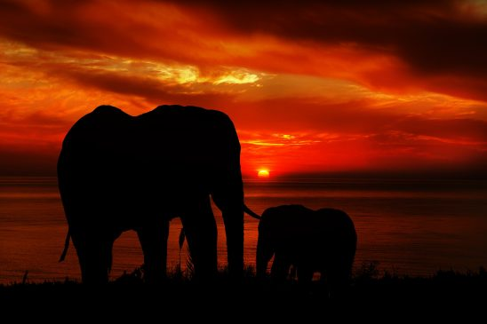 elephants-2641109