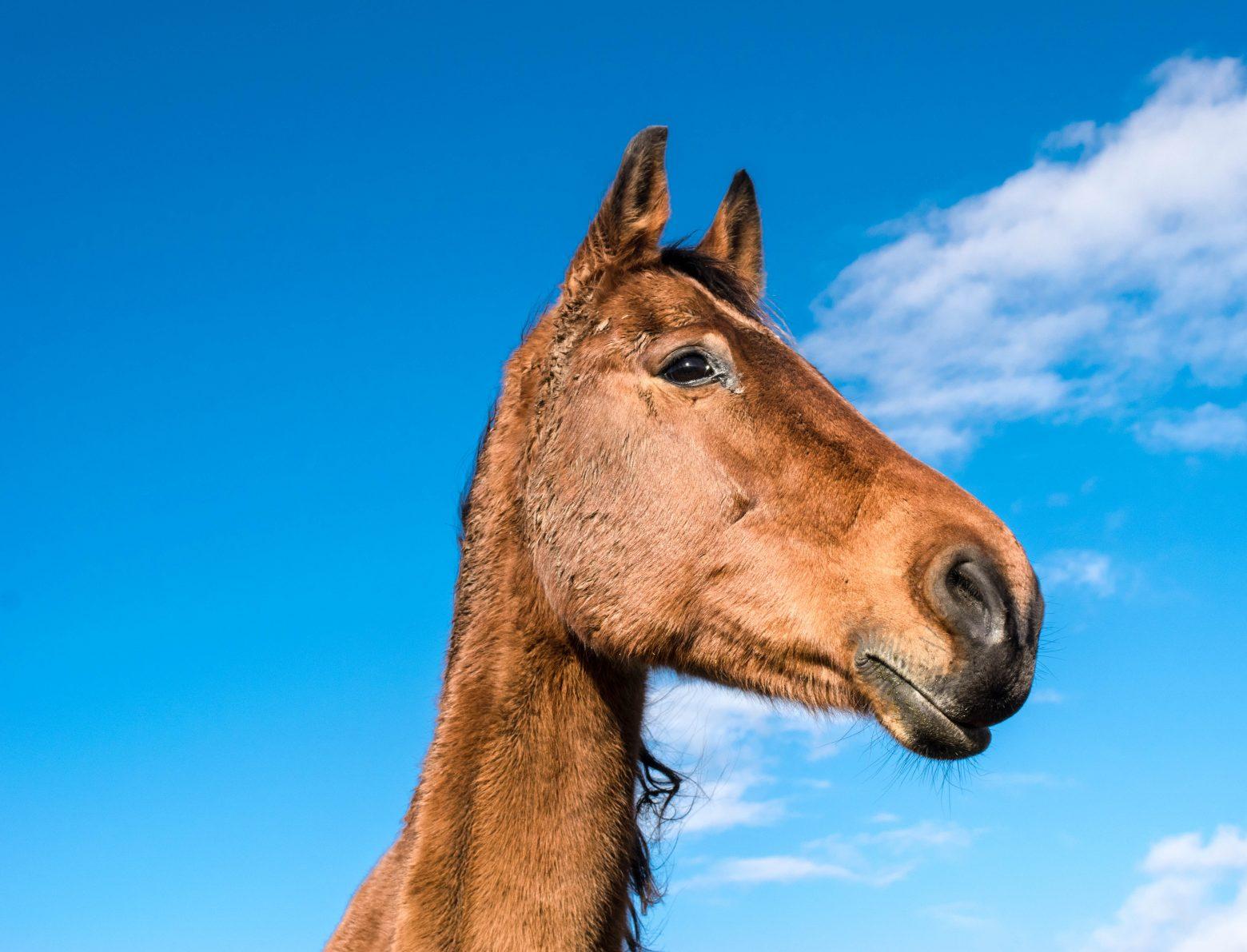 horse-1078675