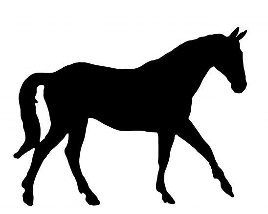 horse-901307