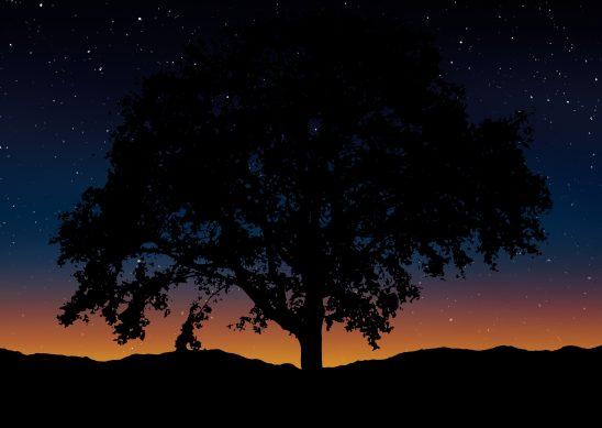 tree-1745316
