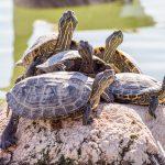 turtle-3267956