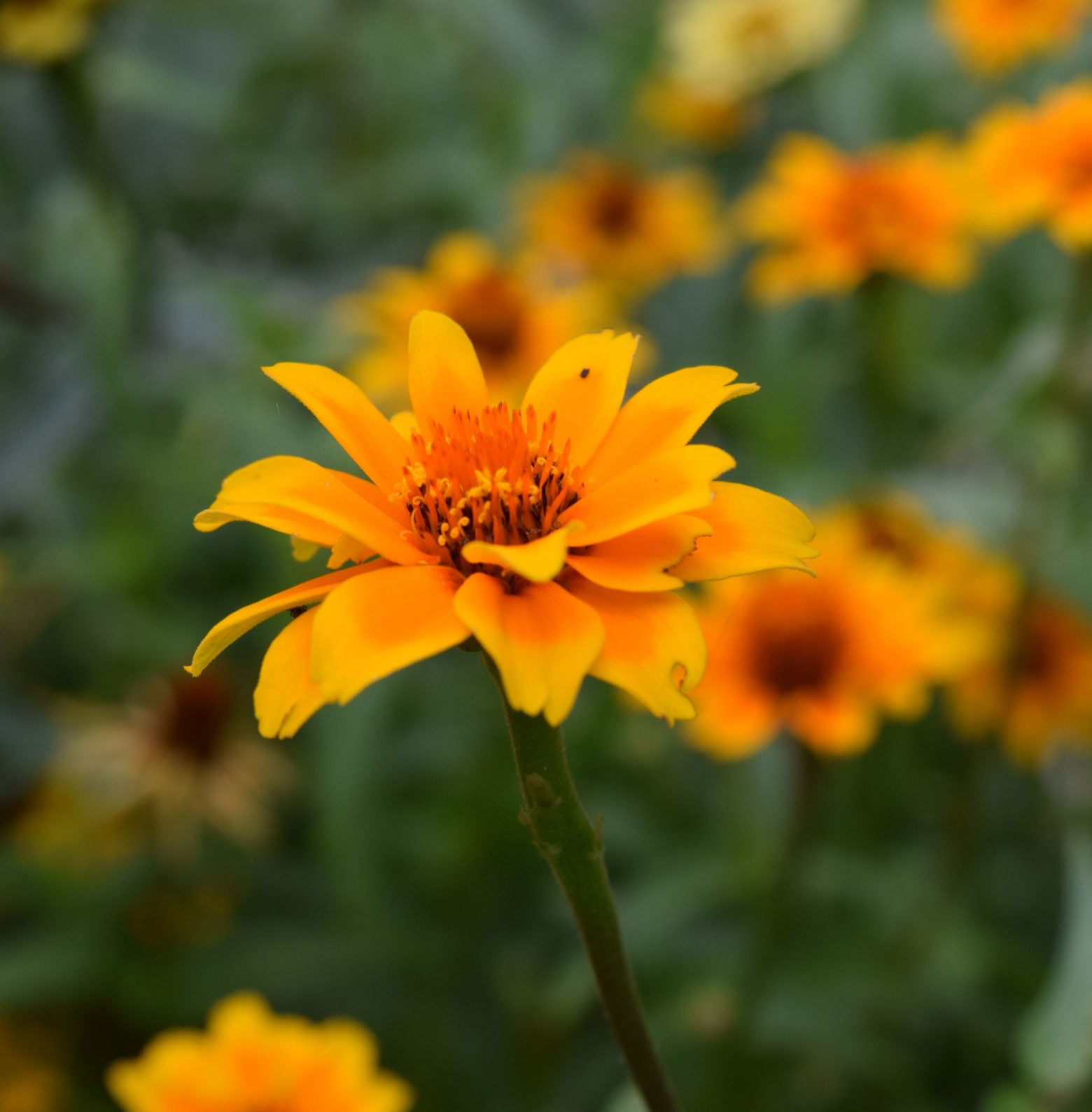 blossom-967422