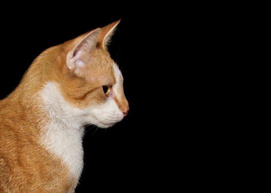 cat-1160565