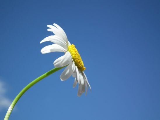 flower-204857