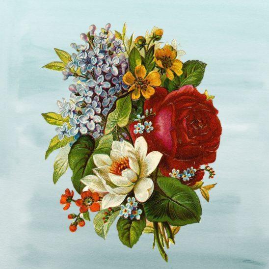 flower-2850241