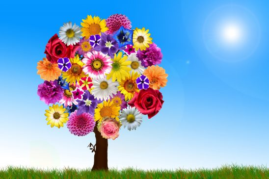 flowers-2731320