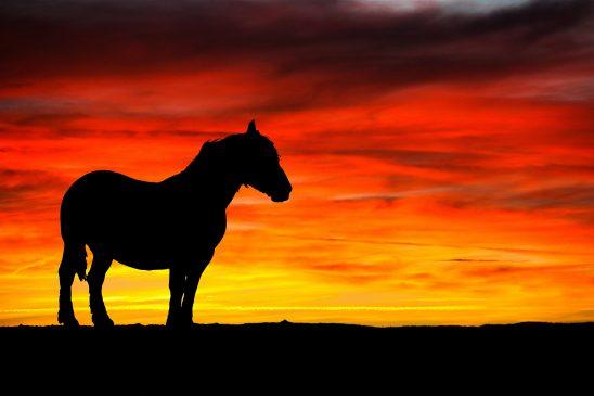 horse-2781545