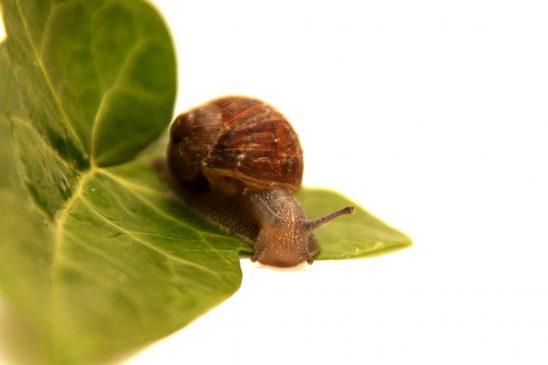 snail-18996