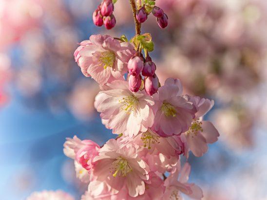 spring-2196307