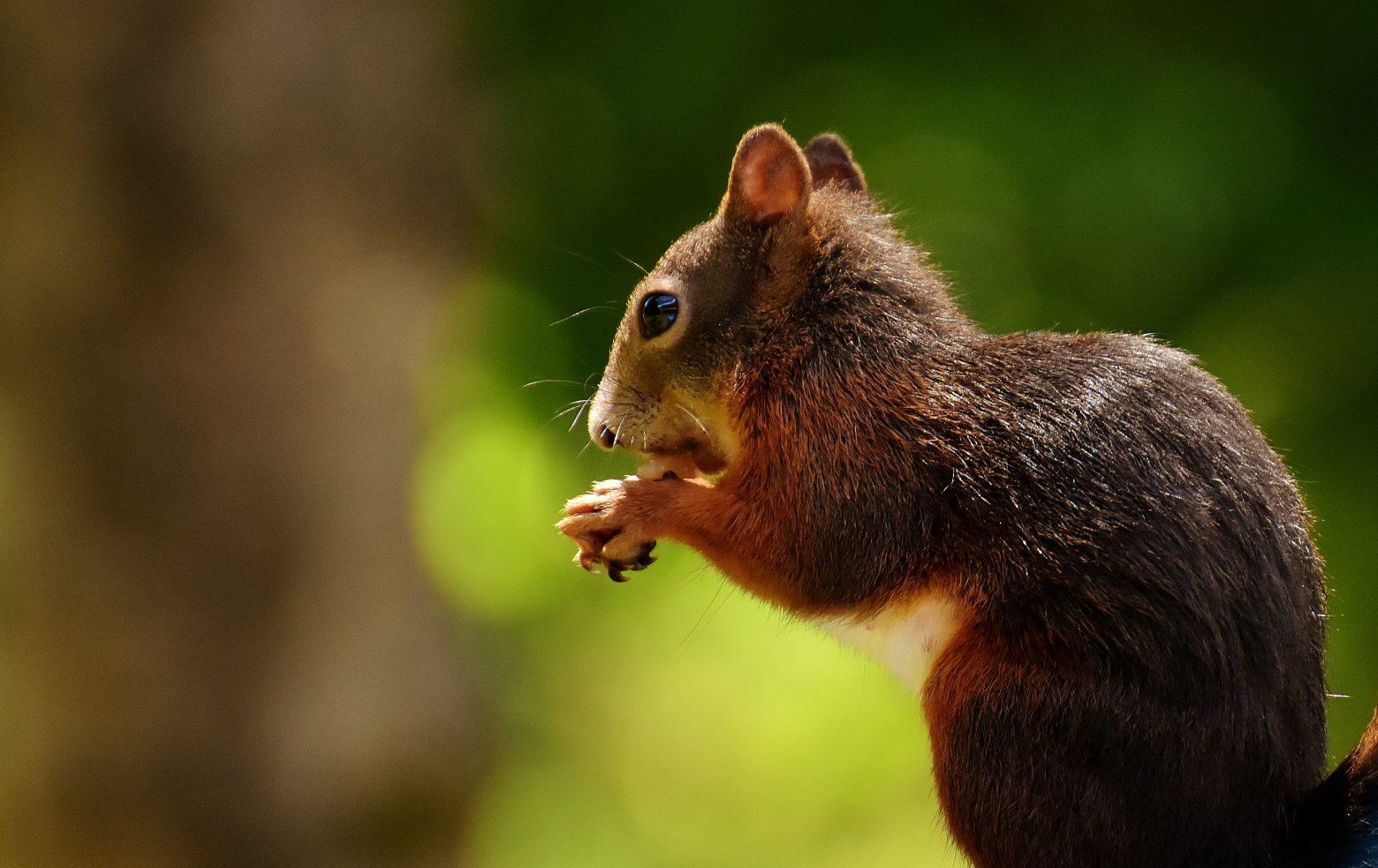 squirrel-2459402