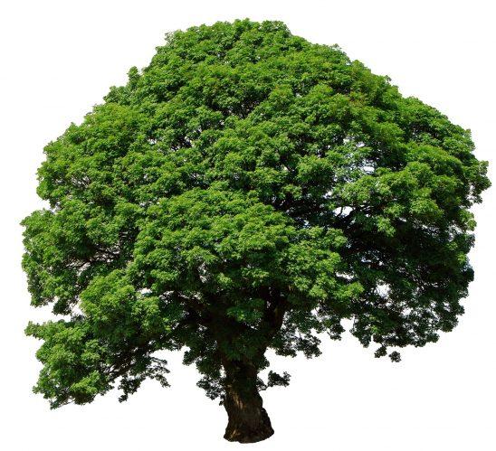 tree-2978499