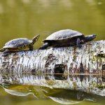 turtles-3289690