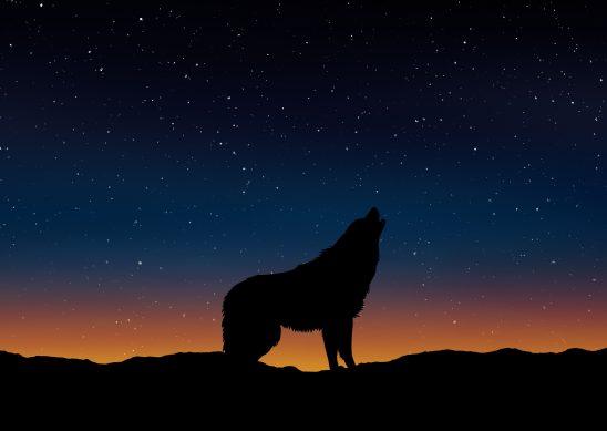wolf-1745336